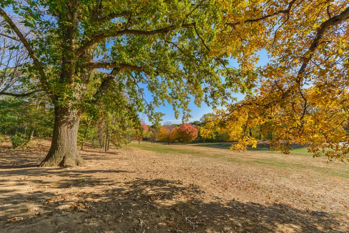 Prospect Park Brooklyn Fall Foliage Autumn Trees