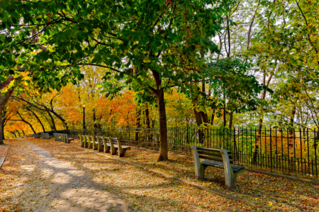 Fall Foliage Shore Road Park Brooklyn
